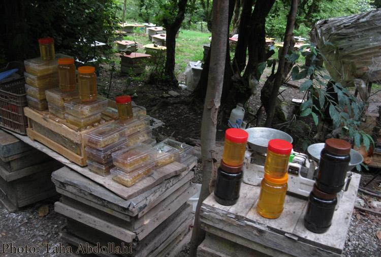تولید-عسل--ویسادار