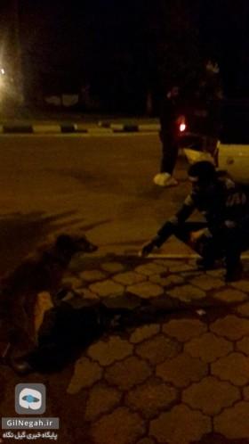 زنده گیری سگهای خیابانی رشت45