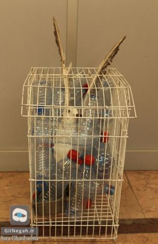 پرنده در قفس