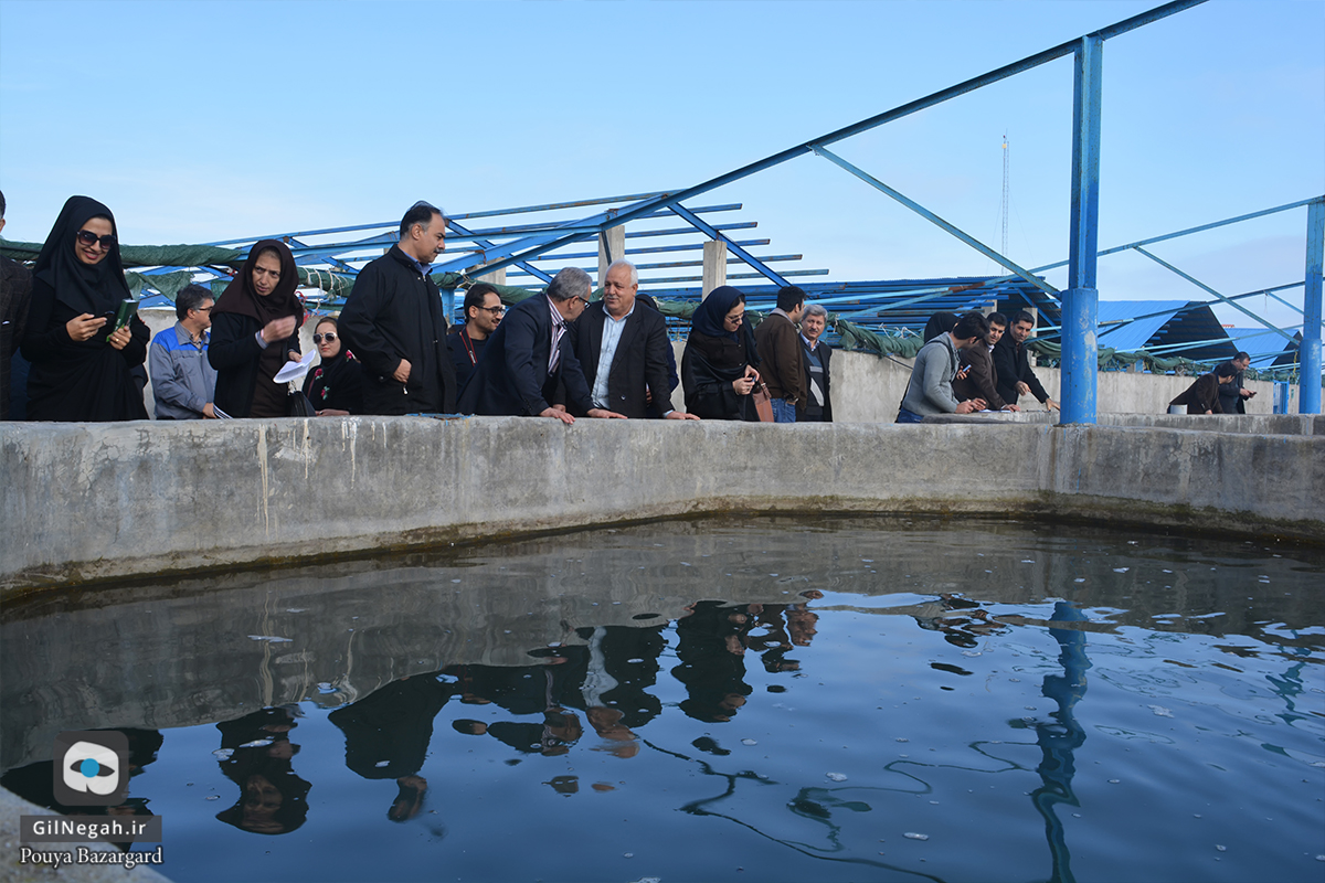 بازدید از مرکز پرورش ماهیان خاویاری تالش (10)