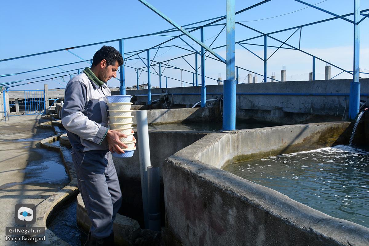 بازدید از مرکز پرورش ماهیان خاویاری تالش (13)