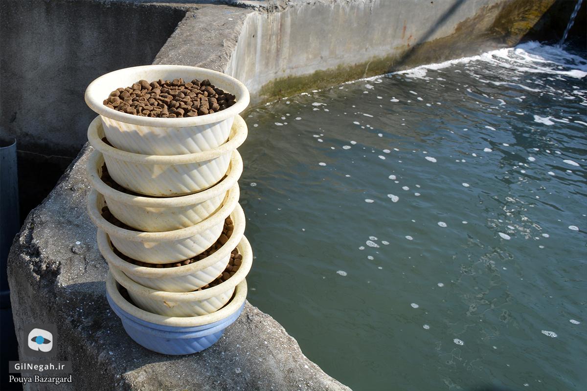 بازدید از مرکز پرورش ماهیان خاویاری تالش (14)