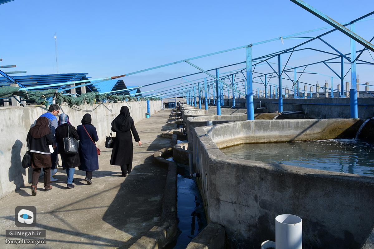 بازدید از مرکز پرورش ماهیان خاویاری تالش (17)