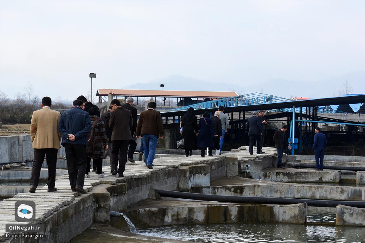 بازدید از مرکز پرورش ماهیان خاویاری تالش (2)