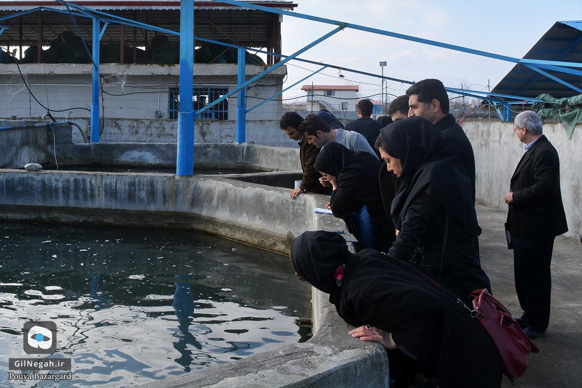 بازدید از مرکز پرورش ماهیان خاویاری تالش (8)