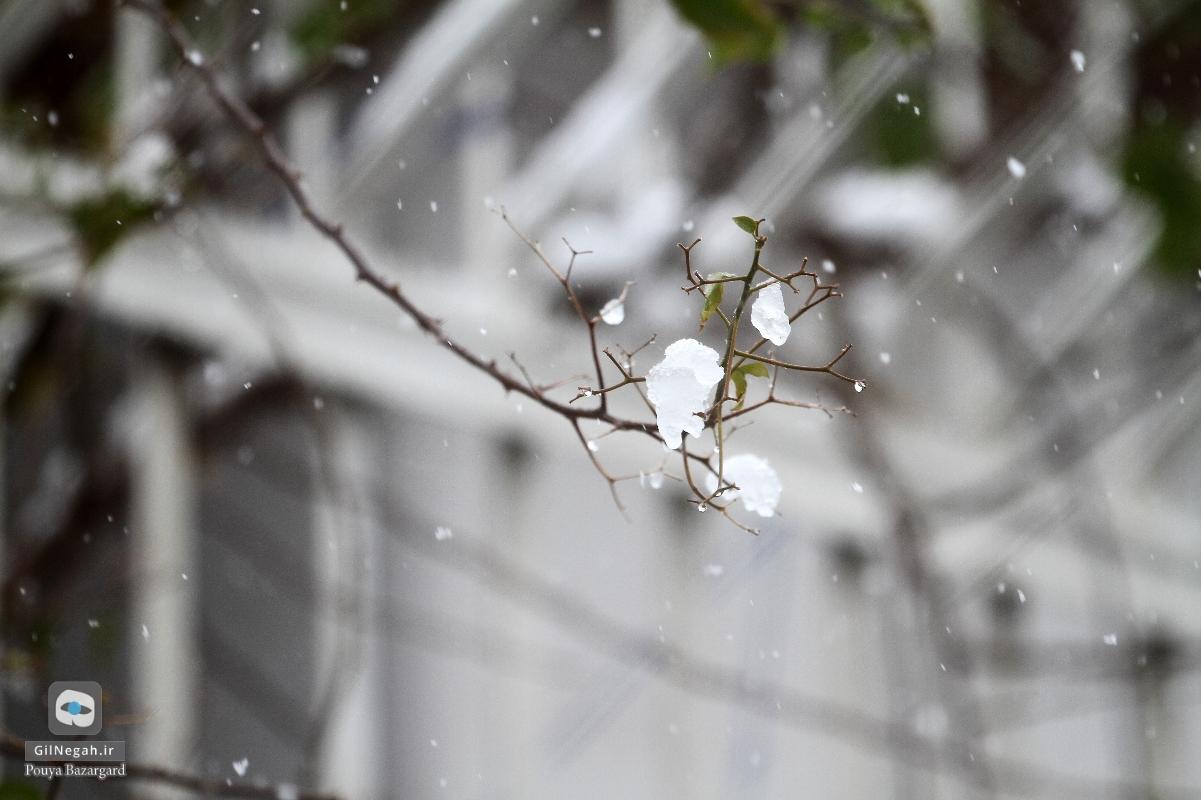 برف رشت (16)