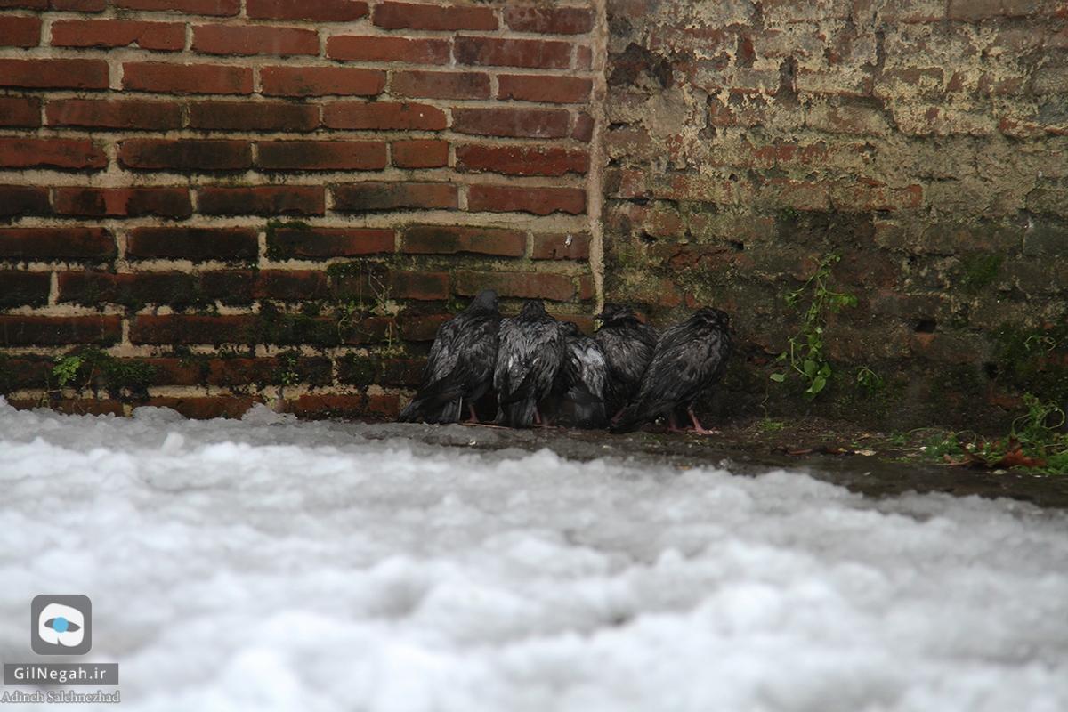برف لنگرود (9)