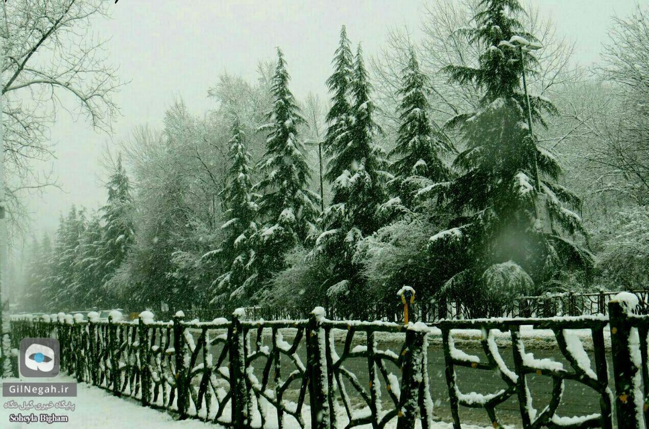 برف پارک ملت رشت (4)