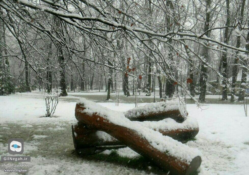 برف پارک ملت رشت (6)
