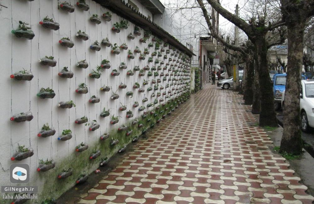 تالش دیوار سبز (2)