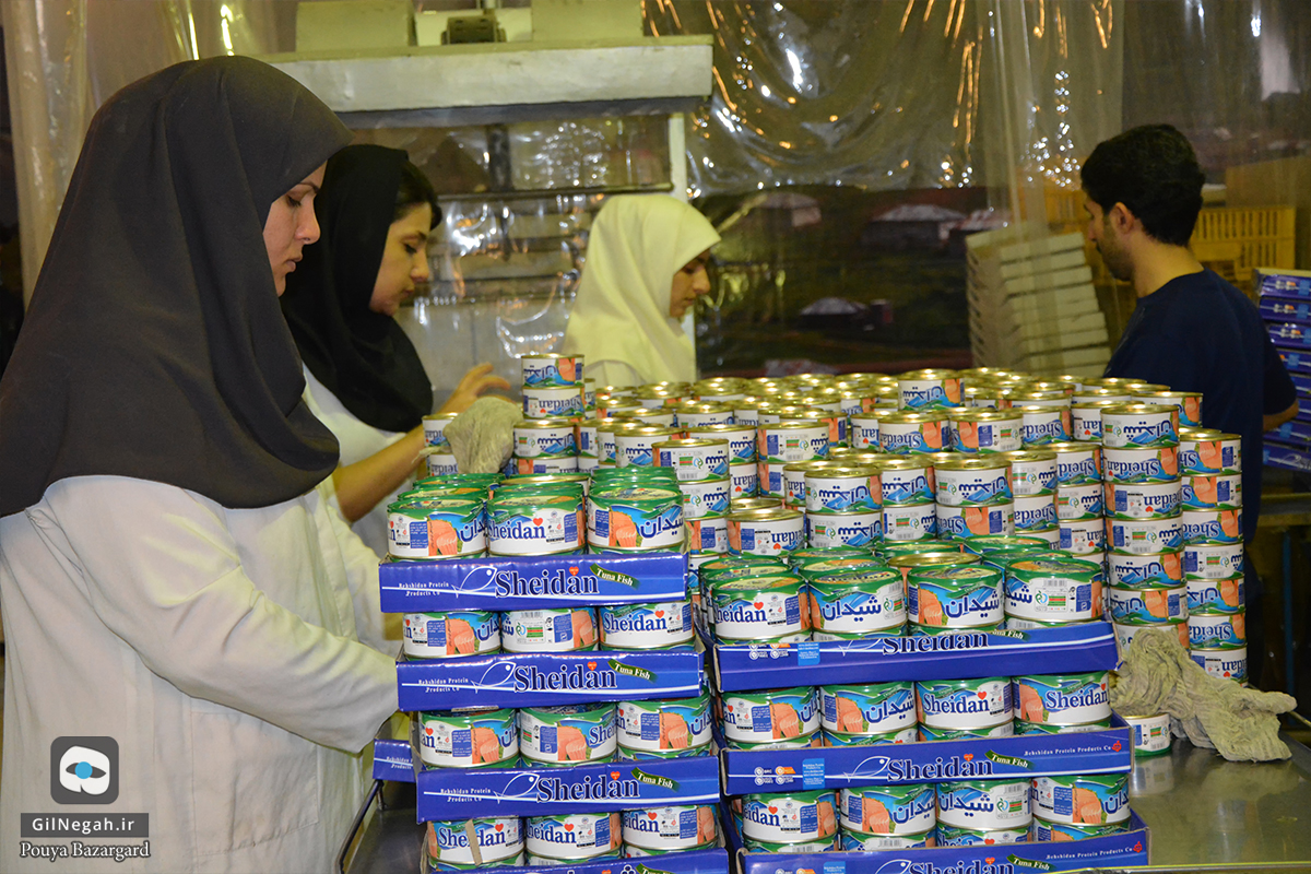 شرکت تن ماهی شیدان (12)