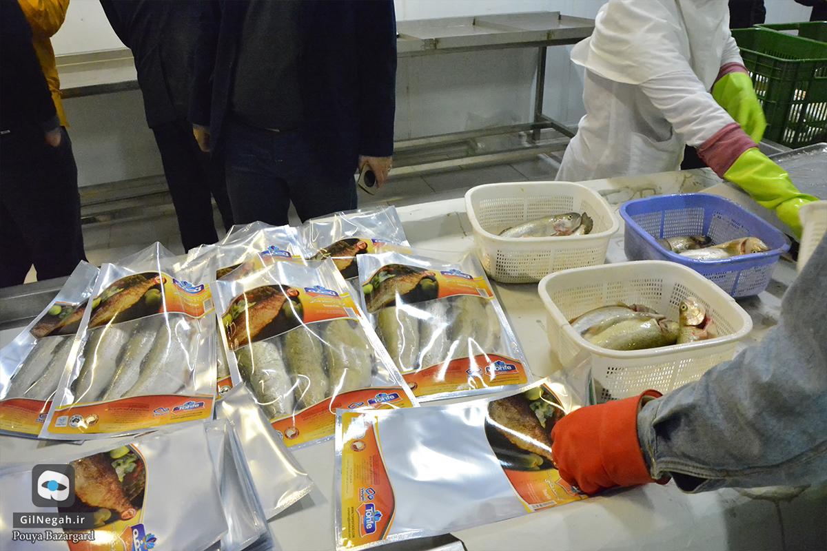 شرکت تن ماهی شیدان (6)
