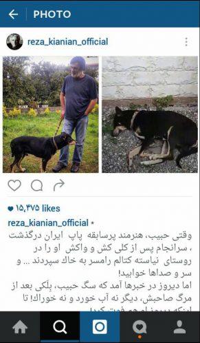 متن رضا کیانیان درباره مرگ سگ حبیب