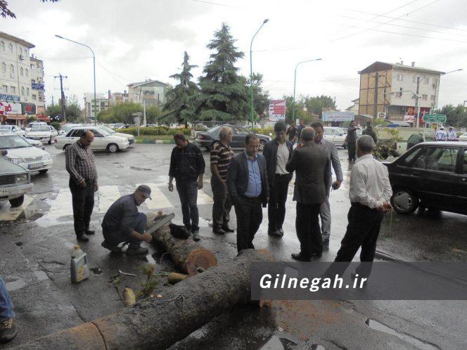 سقوط درخت در خیابان لاکانی رشت (1)