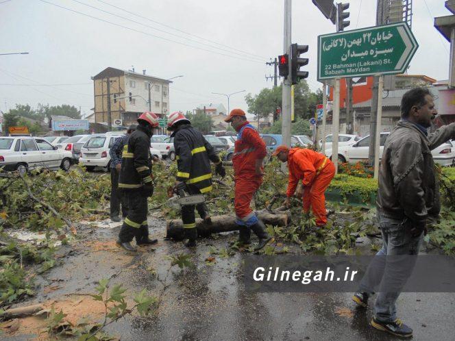 سقوط درخت در خیابان لاکانی رشت (10)