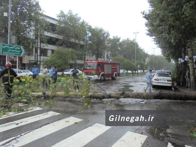 سقوط درخت در خیابان لاکانی رشت (12)