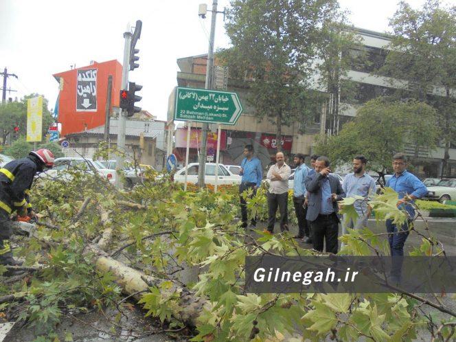 سقوط درخت در خیابان لاکانی رشت (13)