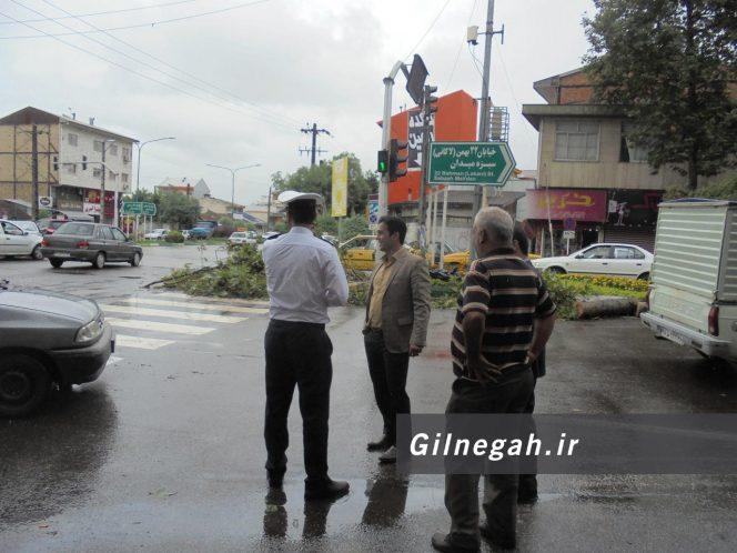 سقوط درخت در خیابان لاکانی رشت (2)