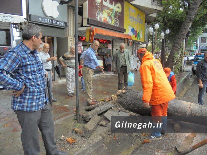 سقوط درخت در خیابان لاکانی رشت (3)