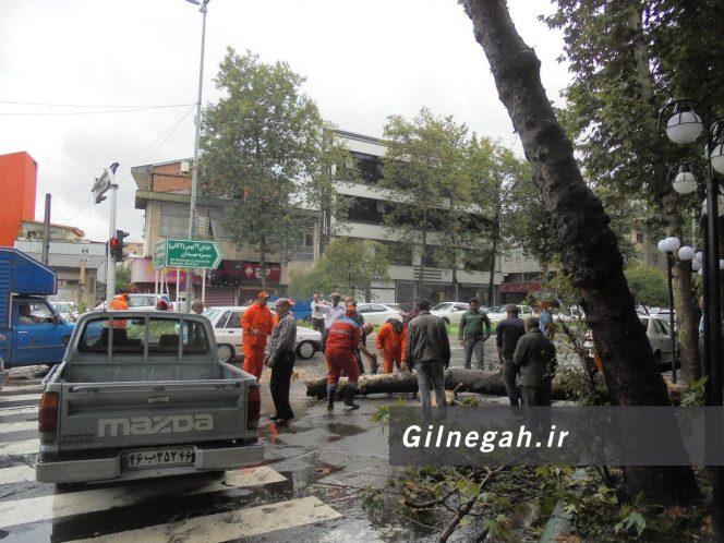سقوط درخت در خیابان لاکانی رشت (4)