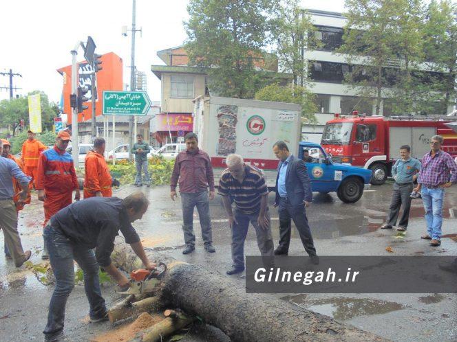 سقوط درخت در خیابان لاکانی رشت (5)