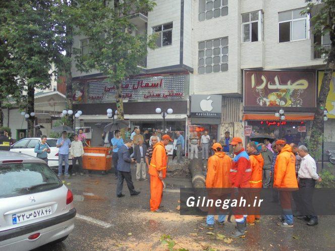 سقوط درخت در خیابان لاکانی رشت (6)