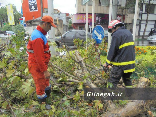 سقوط درخت در خیابان لاکانی رشت (7)