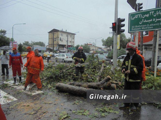 سقوط درخت در خیابان لاکانی رشت (8)
