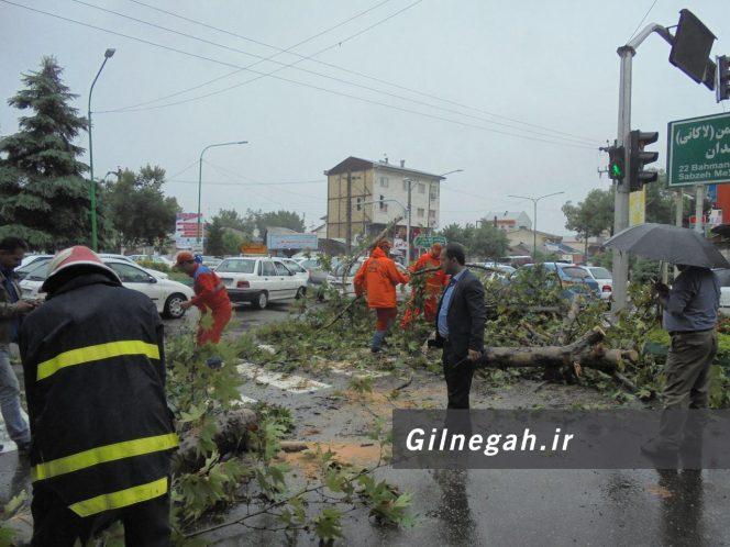 سقوط درخت در خیابان لاکانی رشت (9)