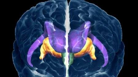 پاسخ دانشمندان به چرایی تشنگی1